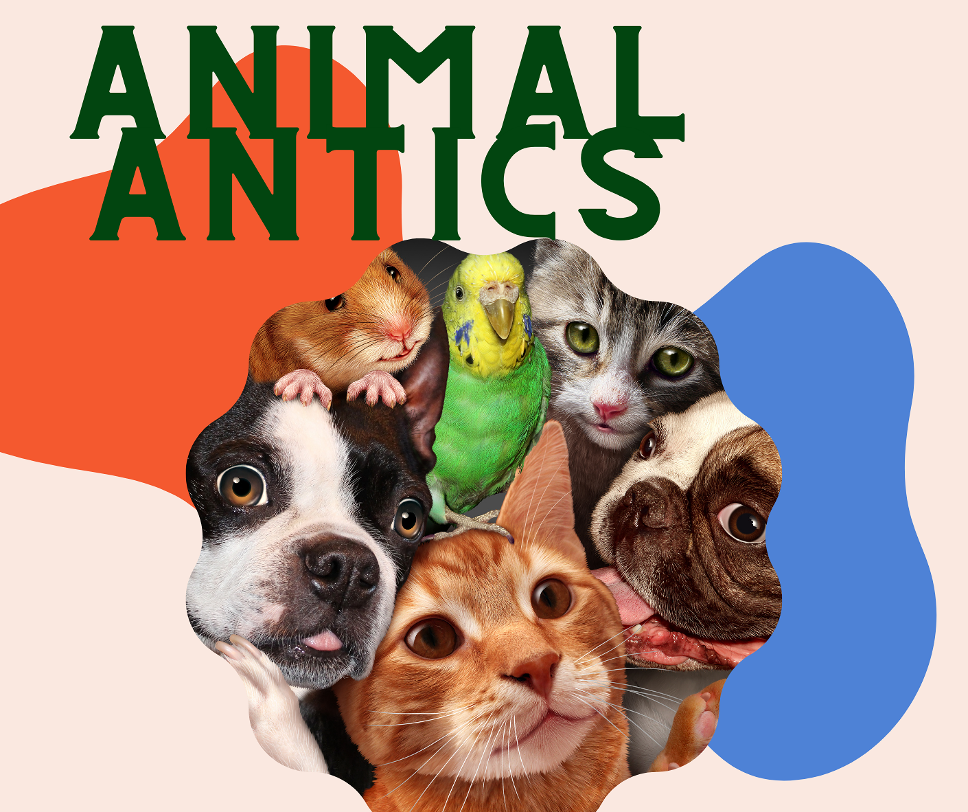 Animal Antics Storyt</body></html>